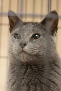 Blind foster kitty extraordinaire